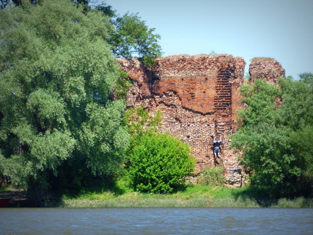 Widok z Wisły na otoczone drzewami ruiny gotyckiego, ceglanego zamku Kazimierza Wielkiego w Złotorii